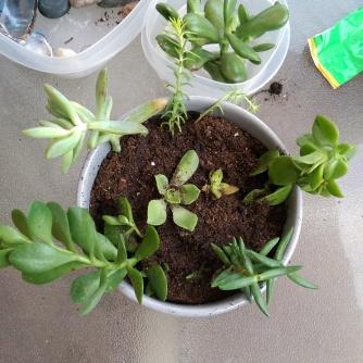 plant27